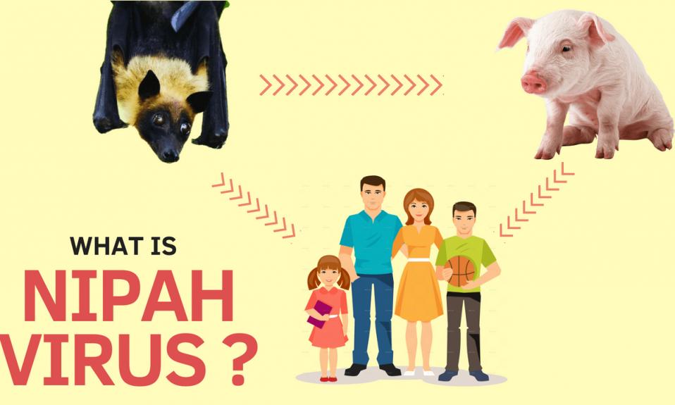 What is NIPAH Virus or NiV? Why is it called NIPAH? Symptoms | Cure