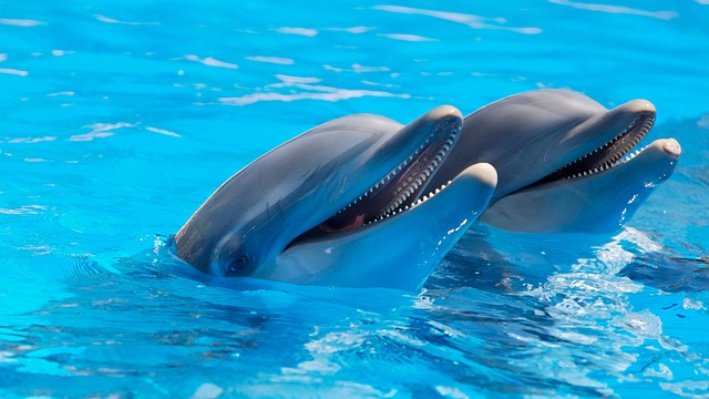 Dolphins are declared as non human persons in India - Unbelievable facts about India