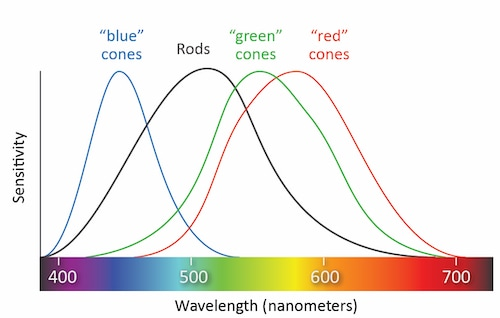 Types of Cones
